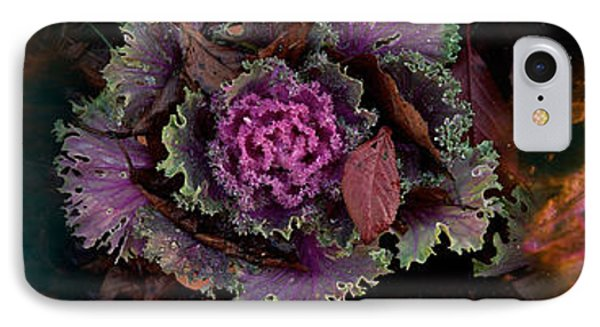 Cabbage With Butterfly Nebula IPhone Case by Panoramic Images