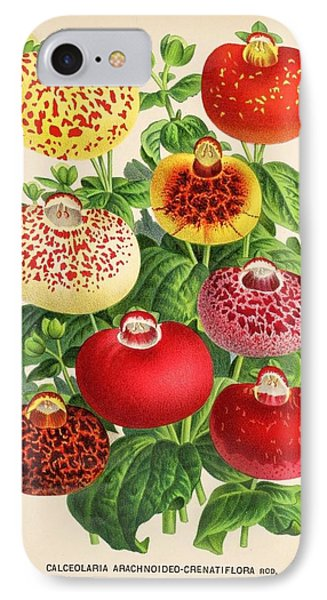 Calceolaria From A Vintage Belgian Book Of Flora. IPhone Case by Unknown