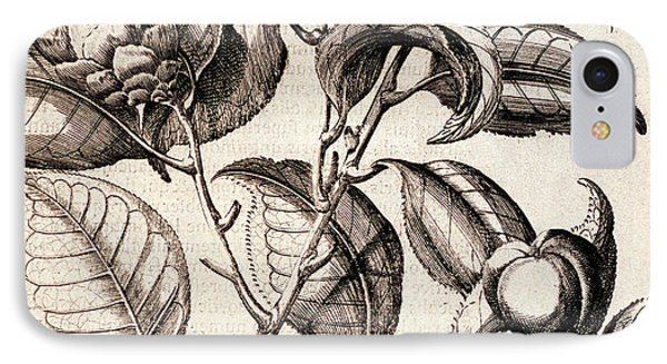 Camellia Japonica Flowers IPhone Case by Natural History Museum, London