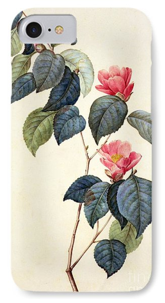 Camellia Japonica IPhone Case by Pierre Joseph Redoute