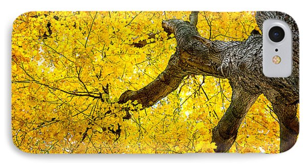 Canopy Of Autumn Leaves IPhone Case by Tom Mc Nemar