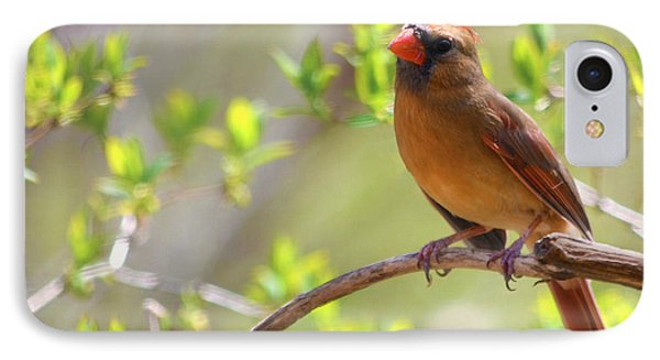 Cardinal In Spring Phone Case by Sandi OReilly