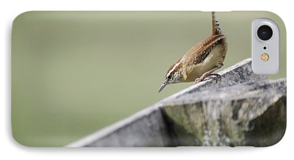 Carolina Wren Two IPhone Case by Heather Applegate