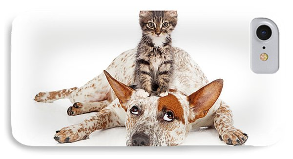 Catte Dog With Kitten On His Head IPhone Case by Susan Schmitz
