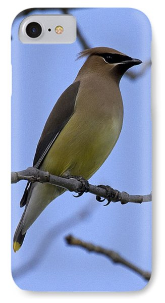 Cedar Waxwing 2 IPhone 7 Case by Eric Mace