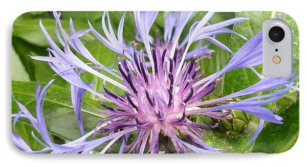 Centaurea Montana Blue Flower IPhone Case by Lingfai Leung
