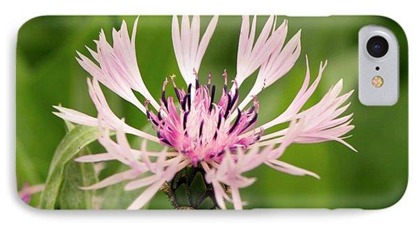 Centaurea Montana 'rosea' IPhone Case by Adrian Thomas