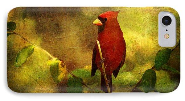 Cheery Red Cardinal  IPhone Case by Lianne Schneider