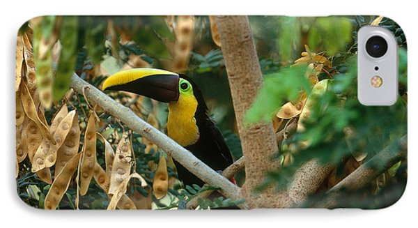 Chestnut-mandibled Toucan IPhone 7 Case by Art Wolfe