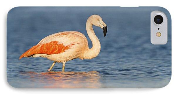Chilean Flamingo IPhone Case by Ronald Kamphius