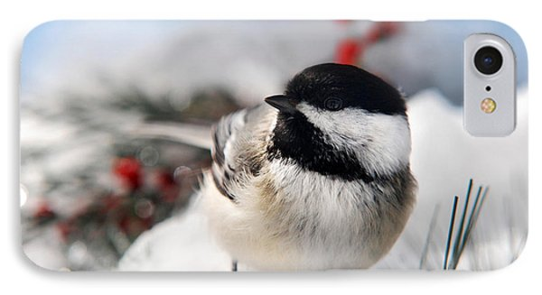 Chilly Chickadee IPhone Case by Christina Rollo