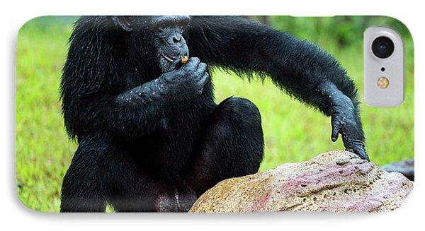 Chimpanzees IPhone 7 Case by Pan Xunbin