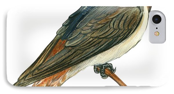 Cliff Swallow  IPhone Case by Anonymous