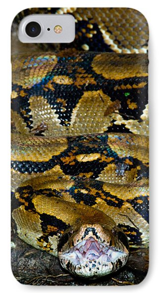 Close-up Of A Boa Constrictor, Arenal IPhone Case by Panoramic Images