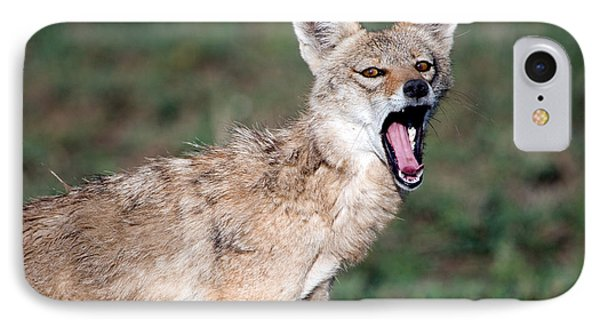 Close-up Of A Golden Jackal Canis IPhone Case by Panoramic Images