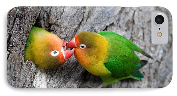 Close-up Of A Pair Of Lovebirds, Ndutu IPhone Case by Panoramic Images