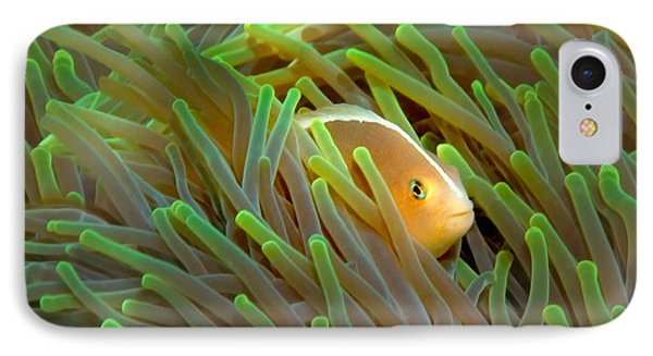 Close-up Of A Skunk Anemone Fish IPhone Case by Panoramic Images