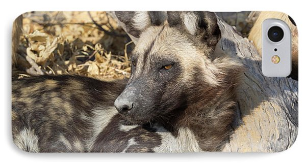 Close-up Of An African Wild Dog Lycaon IPhone Case by Panoramic Images