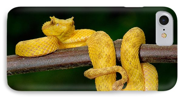 Close-up Of An Eyelash Viper IPhone Case by Panoramic Images
