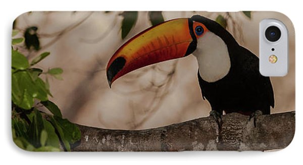 Close-up Of Tocu Toucan Ramphastos Toco IPhone Case by Panoramic Images