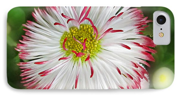 Closeup Of White And Pink Habenera English Daisy Flower Phone Case by Valerie Garner