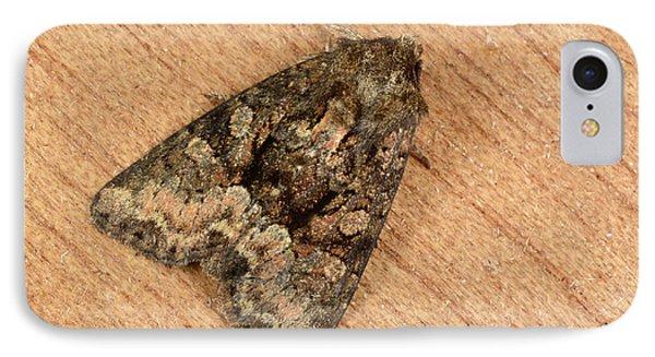 Clouded Brindle Moth IPhone Case by Nigel Downer