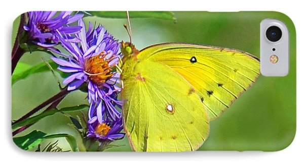 IPhone Case featuring the photograph Clouded Sulphur by Rodney Campbell