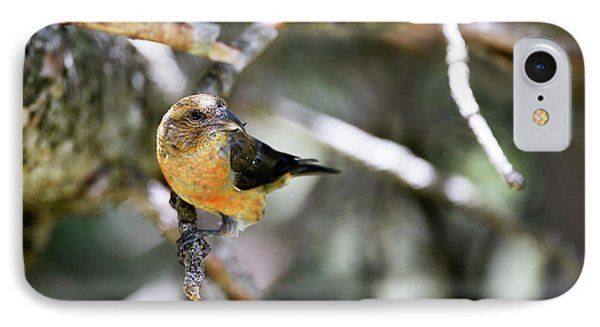 Common Crossbill Female IPhone Case by Dr P. Marazzi