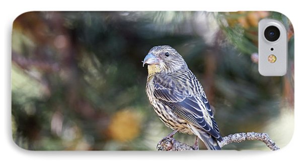 Common Crossbill Juvenile IPhone 7 Case by Dr P. Marazzi