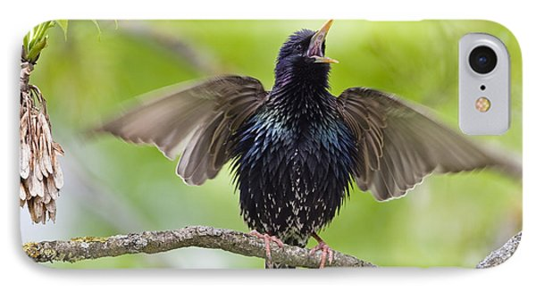 Common Starling Singing Bavaria IPhone 7 Case by Konrad Wothe