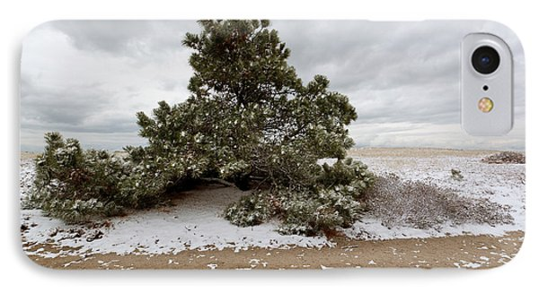 Conifer On A Snowy Cape Cod Beach IPhone Case by Michelle Wiarda