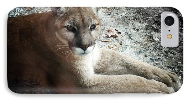 Cougar Country Phone Case by Karen Wiles