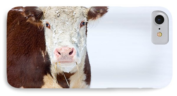 Cow - Fine Art Photography Print Phone Case by James BO  Insogna
