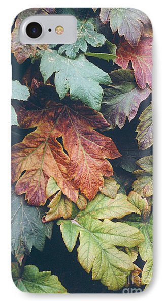 Cow Parsnip Leaves In The Fall Phone Case by Bruce M Herman