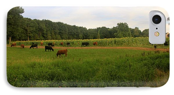 Cows At Buttonwood IPhone Case by Dorothy Drobney