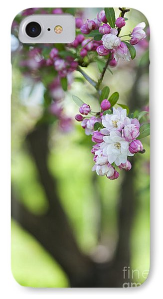 Crab Apple Snow Cloud Tree Blossom IPhone Case by Tim Gainey