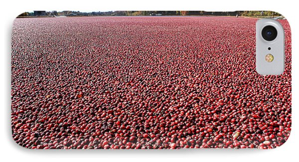 Cranberry Bog In New Jersey Phone Case by Olivier Le Queinec