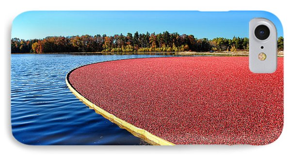 Cranberry Harvest In New Jersey Phone Case by Olivier Le Queinec