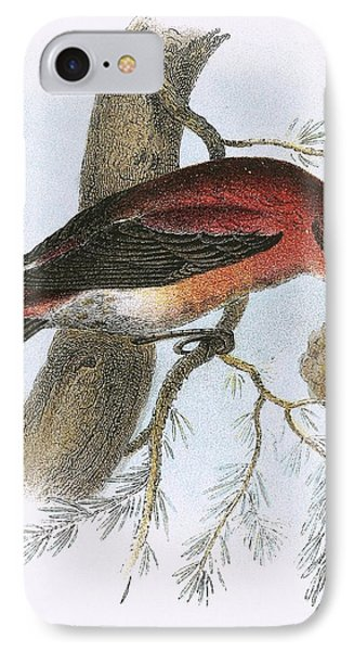 Crossbill IPhone Case by English School
