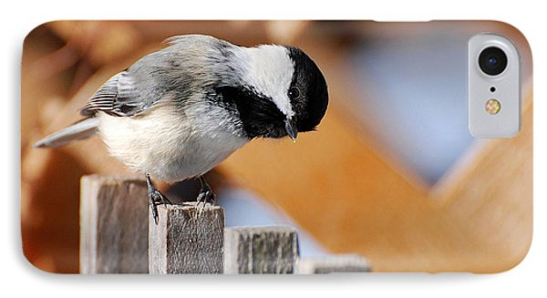 Curious Chickadee IPhone Case by Christina Rollo