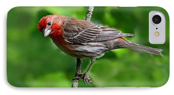 IPhone Case featuring the photograph Curious Purple Finch by Rodney Campbell