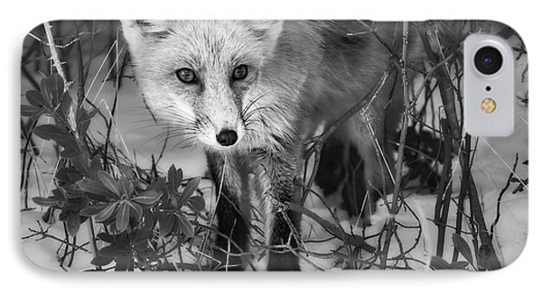 Curious Red Fox Bw IPhone Case by Susan Candelario