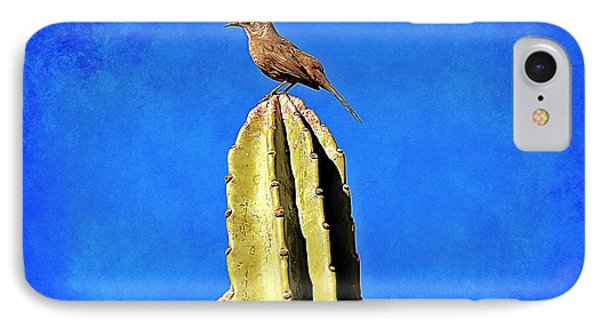 Curve-billed Thrasher IPhone Case by Elizabeth Winter