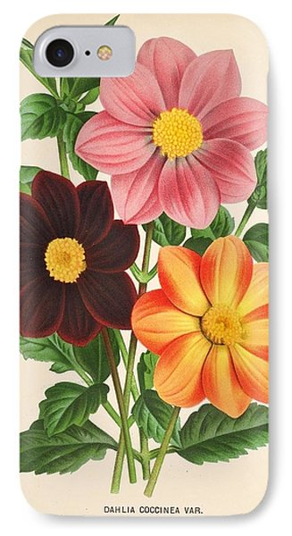 Dahlia Coccinea From A Begian Book Of Flora. IPhone Case by Philip Ralley