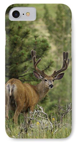 Deer In Velvet IPhone Case by Darren  White
