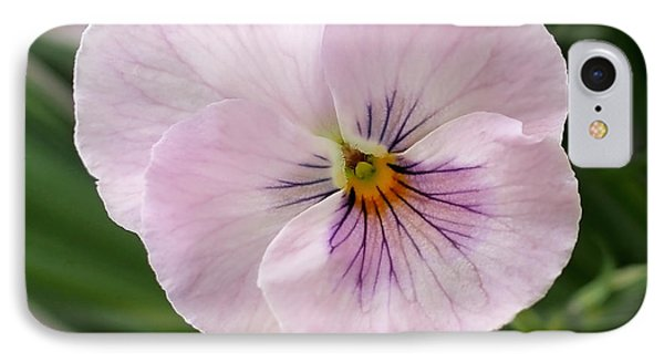 Delicate Pink Pansy IPhone Case by Rona Black