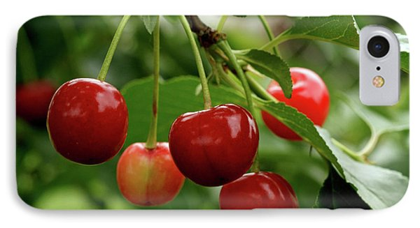Delicious Cherries Phone Case by Sandy Keeton