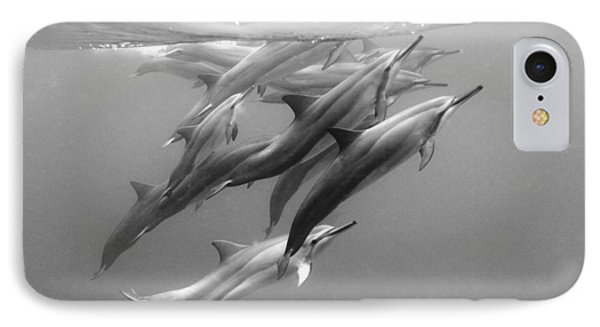 Dolphin Pod IPhone Case by Sean Davey
