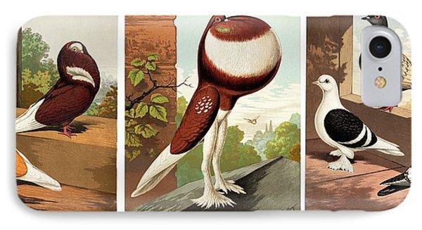 Domestic Fancy Pigeon Breeds IPhone 7 Case by Paul D Stewart