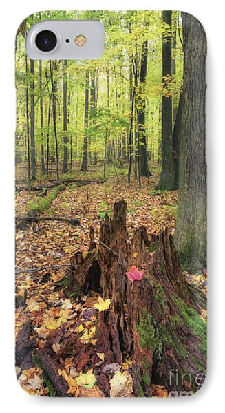 Early Autumn Woods Phone Case by Michele Steffey